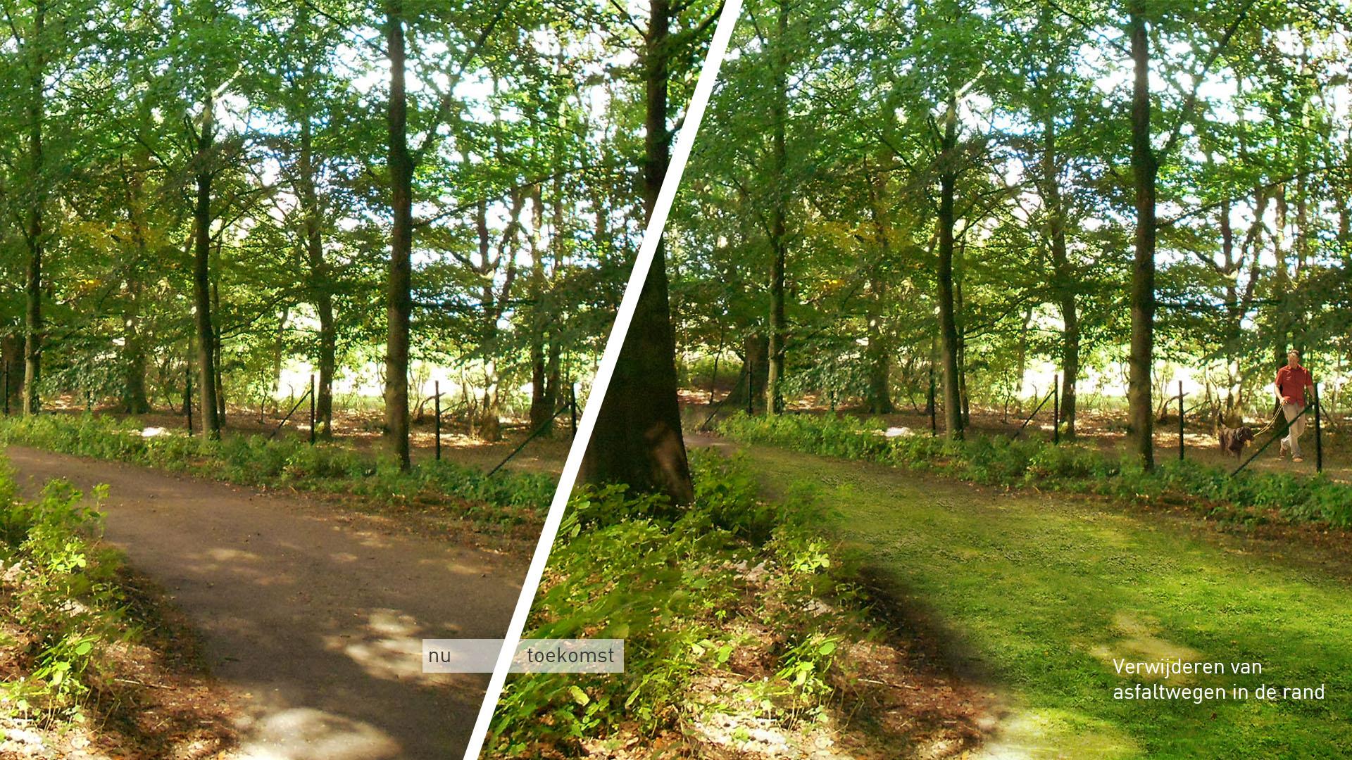 Serenity in the Randstad